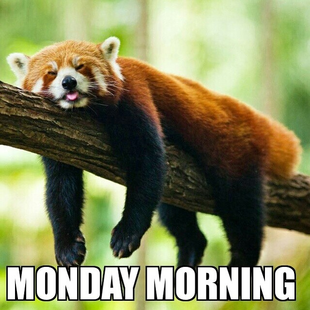 How we felt this morning... On the bright side, Monday is almost over! ✌